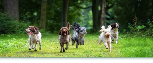 Doggie Daycare Services In Sheen & Chiswick