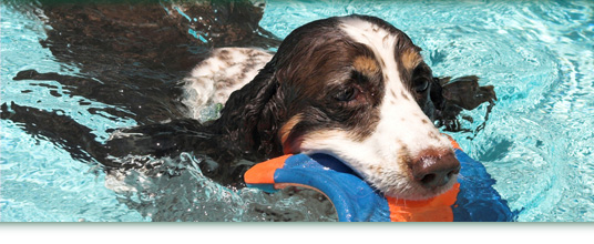 Hydrotherapy For Dogs & Cats Image