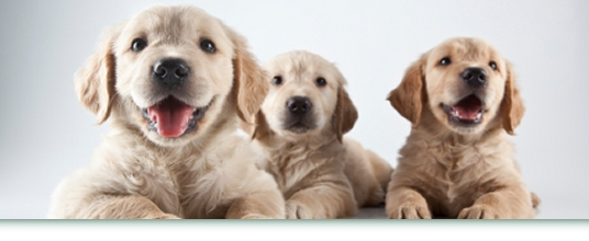 Puppy Grooming Care In West London Image